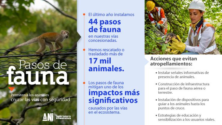 En la ejecución de los proyectos viales que lidera la ANI, se ha logrado la protección de más de 17 mil animales
