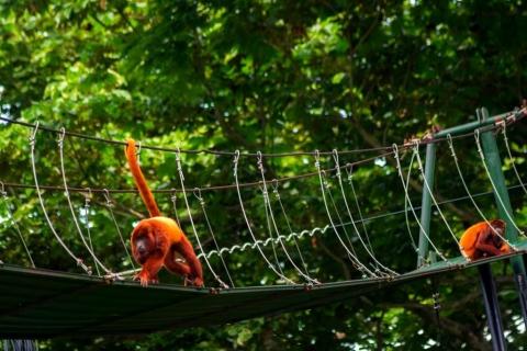 Los pasos de fauna, vitales para salvaguardar la vida de más de seis mil animales en vías nacionales