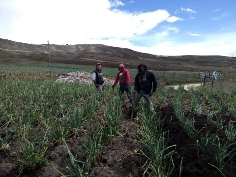 La vía Bucaramanga-Pamplona, un eslabón fundamental  para los microempresarios cebolleros