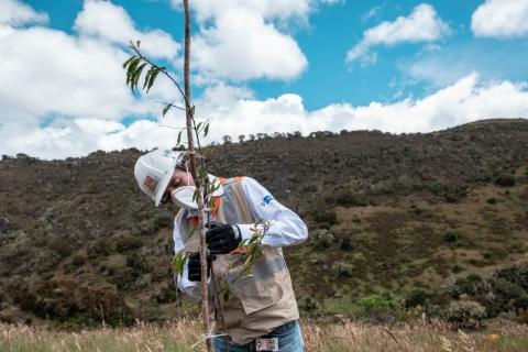 Proyecto Bogotá – Girardot avanza en su compensación social y ambiental con más de 3.300 árboles nativos sembrados