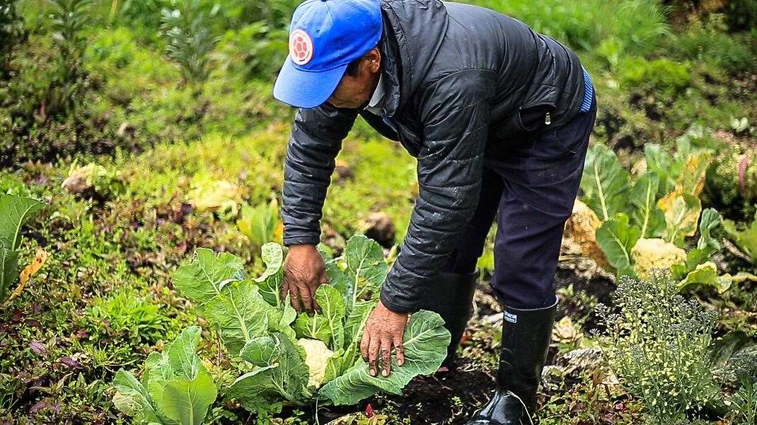 HUERTOS LEÑEROS BENEFICIAN A 822 FAMILIAS NARIÑENSES QUIENES CONTRIBUYEN A FRENAR EL CAMBIO CLIMÁTICO