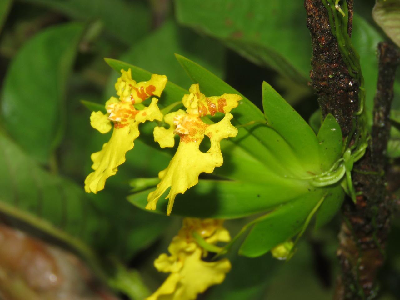 194 especies de orquídeas y bromelias han sido reubicadas para preservar la biodiversidad en la Autopista al Mar 2